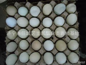 绿壳乌鸡蛋篮 土凤凰 60枚 济宁
