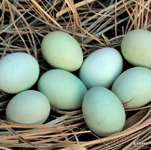 五黑一绿 绿壳乌鸡蛋 绿壳鸡种蛋 绿壳鸡蛋种蛋 绿壳蛋鸡受精蛋