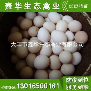 绿色无害草鸡蛋 农家土鸡蛋 孕妇月子蛋 鸡蛋 园林散养鸡禽蛋