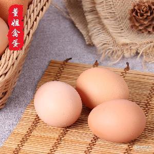 营养 【董姐禽蛋】批发供应纯玉米喂养土鸡蛋 农家土鸡蛋 月子蛋