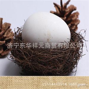 授精鹅蛋 鹅苗 批发出售新鲜大鹅蛋