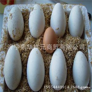 新鲜营养鹅蛋 直销新鲜大鹅蛋 鹅蛋价格