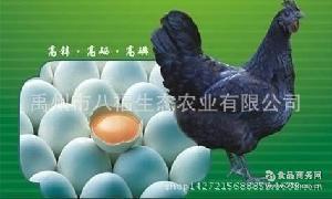 厂家特价直供批发有机新鲜绿壳鸡蛋 厂家批发 量大从优 乌鸡蛋