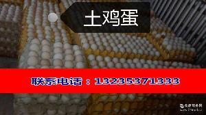 土鸡蛋无公害山上散养笨鸡蛋柴鸡蛋厂家批发