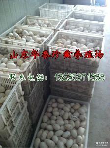 质量保证鹅蛋 优质真空鸭蛋双黄鸭蛋