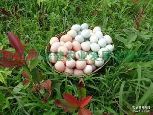 绿壳蛋 上海* 价格优惠 绿色营养 绿壳乌鸡蛋