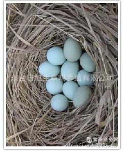野生咸鸭蛋乌鸡绿壳蛋野鸡蛋 无公害生态鸡蛋