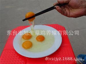 虫草鸡蛋 无公害生态鸡蛋 乌鸡绿壳蛋