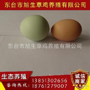 生态乌鸡绿壳蛋 土鸡蛋 全国直销 价格合理 纯天然散养绿壳鸡蛋