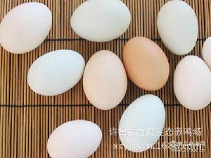 供应优质天然柴鸡蛋土鸡蛋绿皮鸡蛋 许昌县益健生态养鸡场