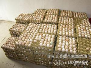 销售柴鸡笨鸡蛋 品种优良物美价廉种蛋批发 柴鸡苗批发