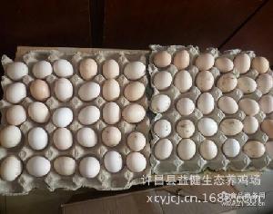 河南许昌供应柴绿色新鲜鸡苗优质绿皮柴鸡蛋土鸡蛋特惠价