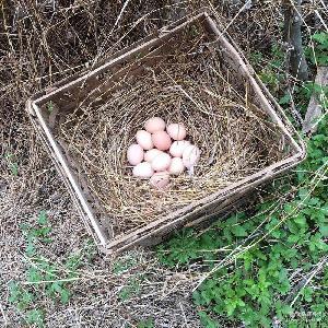 农家散养土鸡蛋新鲜柴鸡蛋草鸡蛋笨鸡蛋30枚