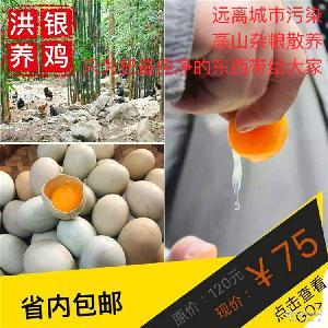 跑山乌鸡蛋四川特产农家散养绿壳鸡蛋30颗每盒川内包邮2.5元绿色