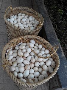 大量长期供应农户放养优质纯粮食绿色青草喂养四川重庆白土鹅蛋