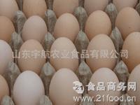 专业出售乌鸡种蛋