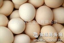 诚信经营品质保证的乌鸡种蛋
