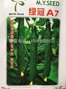 绿冠A7越夏黄瓜种子 露地栽培黄瓜 蔬菜种子
