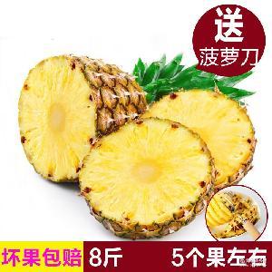 广西大菠萝凤梨新鲜热带水果甜脆爽口海南菠萝8斤装批发一件代发