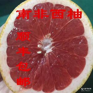 12个6个装大果葡萄柚红心西柚新鲜水 顺丰包邮 南非西柚叶酸丰富