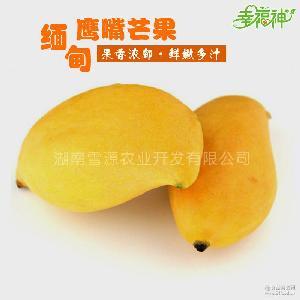 缅甸进口鹰嘴芒5斤新鲜热带时令水果现货芒果核薄胜青芒玉芒香芒