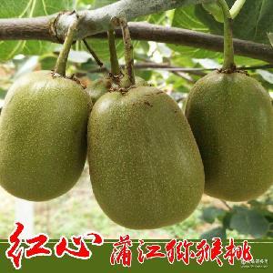 新鲜水果奇异果 正宗浦江红心猕猴桃产地一件代发 红心猕猴桃大果