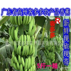 广东高州新鲜香蕉水果5斤青香蕉健康果园直发