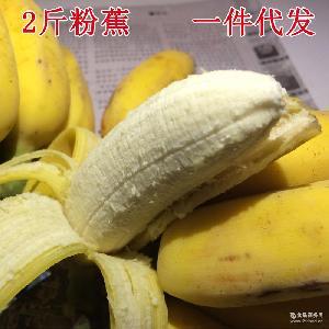 新鲜水果现摘粉蕉小米蕉芭蕉香蕉海南皇帝蕉无催熟banana2斤包邮