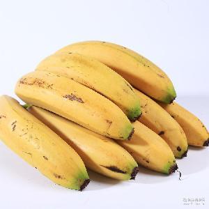 新鲜水果箱装10公斤香蕉果农现摘现发