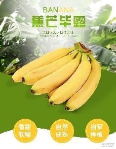 无公害土楼特产水果 天宝特产香蕉 新鲜水果箱装香蕉果农现摘现发
