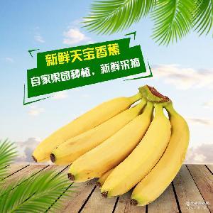 闽南特产香蕉 漳州南靖一颗种子天宝蕉 无添加孕妇儿童食用水果