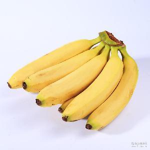 闽南热带水果 天宝特产香蕉 新鲜水果5斤装果农现摘现发一件代发
