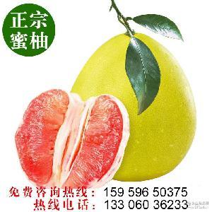 红心柚子 ,38 正宗平和蜜柚 ,38 琯溪蜜柚 ,38 标准外贸水果产地批发直销