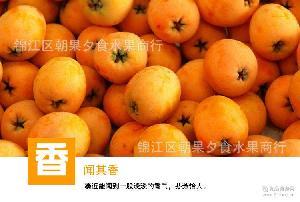 预售 四川龙泉大五星枇杷中果水果一件代发果非米易现摘现货三斤