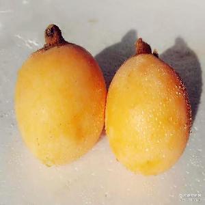 超甜 新鲜水果四川米易大五星枇杷果园直供 当季 新鲜采摘 时令