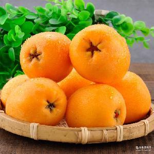 批发新鲜水果四川茂县应季水果大五星枇杷现摘现发皮薄肉厚5斤装
