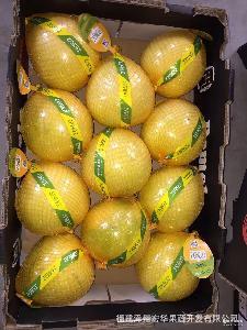 产地直销漳州柚子白心平和蜜柚琯溪白肉蜜柚12KG斤出口俄罗斯欧盟