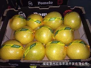 平和琯溪蜜柚产地白肉蜜柚供应出口俄罗斯欧盟柚子8-12个白柚批发