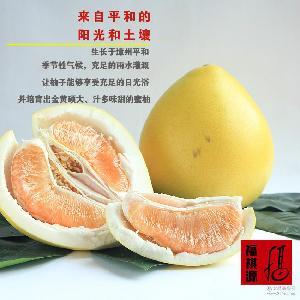 平 预售 黄肉柚子 平和蜜柚 预订 黄金柚 产地直销 生鲜水果 黄柚