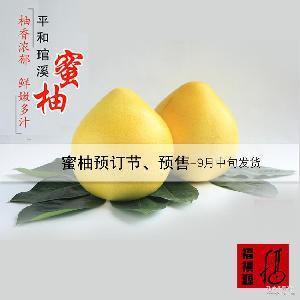 平和特产 预订 预售 产地直销 平和蜜柚 生鲜水果 白柚 白肉柚子