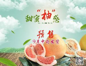预订 平和特产 产地直销 生鲜水果 红肉红心柚子 预售 平和蜜柚