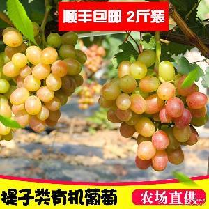 有机红提子2斤装 时令 德盛康葡萄新鲜 水果批发包邮当季葡萄