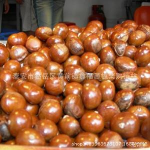 黑又亮 产地常年直供适用于糖炒泰山板栗 皮薄易剥 泰山油栗