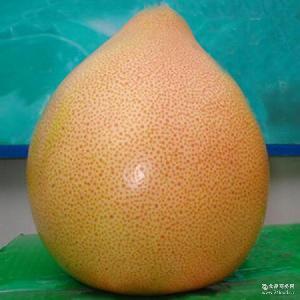量大从优 平和柚子果园产地直销 三红蜜柚福建平和蜜柚