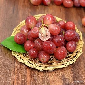 现摘现卖 新鲜提子 红提葡萄 新鲜水果高营养 农场直销
