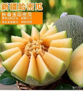 批发新疆西周长香玉哈密瓜3个装约14斤 新鲜水果蜜瓜香甜爽口