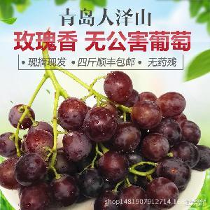 大泽山玫瑰香葡萄新鲜葡萄新鲜水果非提子四斤顺丰包邮现摘现发