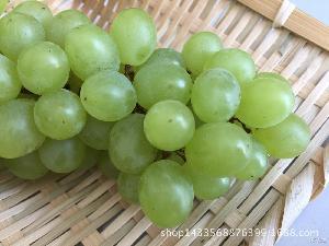 支持一件代发 新疆吐鲁番无核白葡萄新鲜水果无籽青提5斤包邮