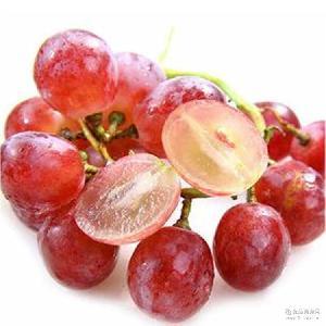 颗粒饱满红提葡萄 味道甘甜 新疆奎屯hongt 新疆特产红提葡萄