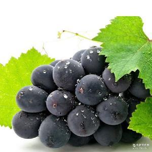 批发新鲜水果疆特产水果夏黑葡萄现摘现发果园直供3斤装